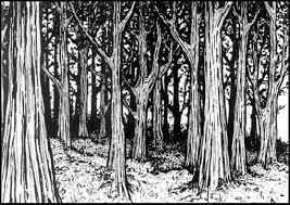 snowy-woods